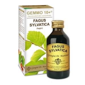 Faggio Gemmoderivato Concentrato Liquido analcoolico - www.AntiAgeBoutique.com